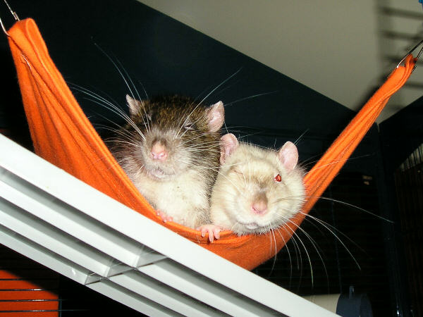 Chester and Casey
